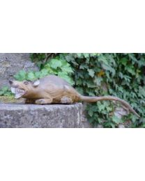 Longlife Ratte