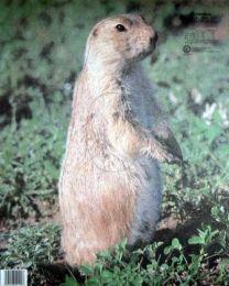 Tierbild Erdhörnchen
