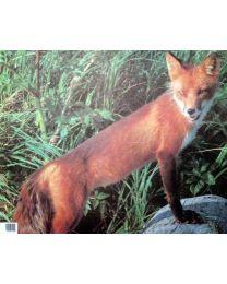 Tierbild Fuchs